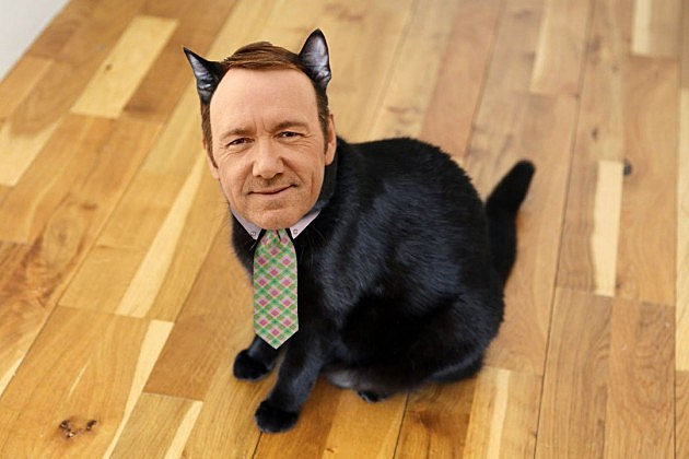 Kevin Spacey Cat